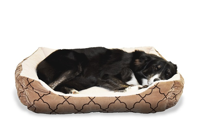 best chew resistant dog beds   15 amazing tough pet beds for
