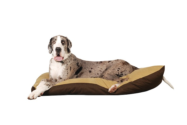 best great dane dog beds | 15 comfortable big pet beds | imagine